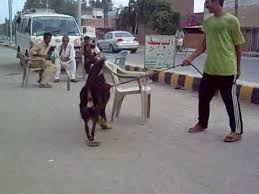 belgian sheepdog guard dog belgian shepherd in sargodha youtube