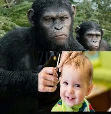 Meme Monkey - 34 monkey haircut meme dump funny memes daily lol pics