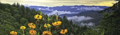 great smoky mountains national park u s national park service