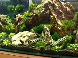 Aquascape Moss Aquascaping The Aquarium March 2017 Aquarium Trends