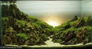Aga Aquascape Fish Tank Background Pictures 50 Best Aquarium Backgrounds To