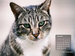 Small Desktop Calendar Free Free September Desktop Calendar Wallpaper The Feral Life Cat Blog