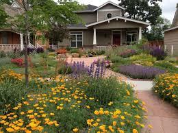 best 25 succulent landscaping ideas on pinterest outdoor cactus