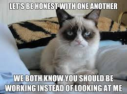 Working Cat Meme - let s be honest with one another we both know you should be