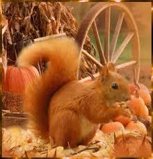squirrel slideshow lessons tes teach
