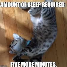 Meme Sleepy - sleepy cat memes we can all relate to these adorably sleepy cats