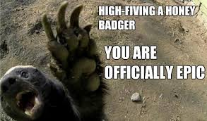 Meme Honey Badger - honey badger high five honey badger know your meme