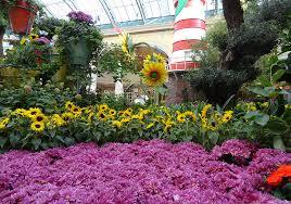 Bellagio Botanical Garden Bellagio Conservatory Botanical Gardens Summer Garden