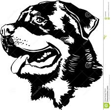 rottweiler stock illustrations u2013 600 rottweiler stock