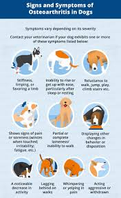 Pain Climbing Stairs by Osteoarthritis In Dogs Causes Symptoms U0026 Management Canna Pet