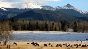 Colorado wildlife images Colorado wildlife wildlife watching in colorado jpg