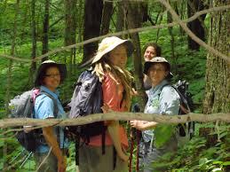 wild ginseng in steep decline in maryland survey reveals q u0026a