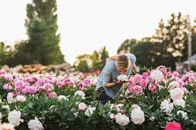 how to grow a cut flower garden as impressive as floret farm