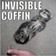 Invisible Cat Memes - funny invisible pictures 15 pics