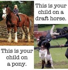 Horse Riding Meme - the day juanito the pony made leadline mothers everywhere clutch