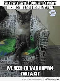 Funny Saturday Memes - 22 funny sitting cat meme pmslweb