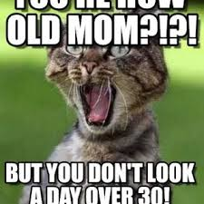 Sister Memes Funny - tag for happy birthday sister funny cat happy birthday catmeme