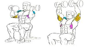 Muscles Used During Bench Press The Benefits Of The Standing Barbell Shoulder Press Fitness And