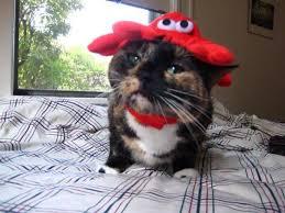 Crab Halloween Costume Halloween Costume Contest Finalists Vote Favorite