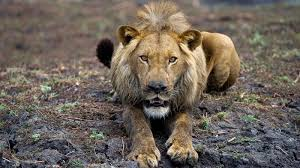african safari animals african safari african safari holidays with africa odyssey