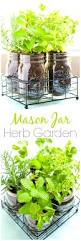 furniture captivating fantastic indoor herb garden ideas