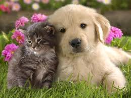 cutest puppies and kittens kids coloring europe travel guides com