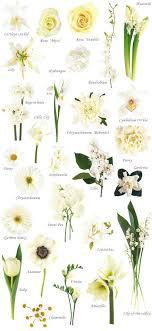 white flower names of white flowers for wedding kantora info