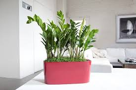 Beautiful Indoor Plants Designs Ideas Cool Succulents For Indoor Plant Ideas Make Your