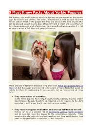 5 must facts about yorkie puppies