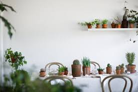 rent a houseplant the plant library delivers gardenista