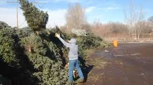 Christmas Tree Pick Up Recycling Christmas Tree Is Easy Drop It Off Or Call Boy Scouts