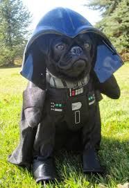 Halloween Costume Ideas For Pets Best Halloween Costume Ideas For Dogs Paperblog