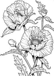 poppy coloring pages poppy coloring beautiful