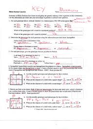 genetics worksheet answers simpsons genetics worksheet answers