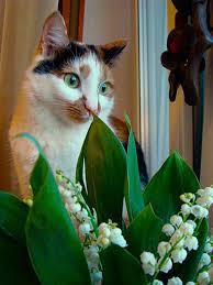Love Flowers Cats Love Flowers Ego Alterego Com