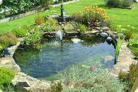 Backyard Nature Products Pond Products Carefree Enzymes Inc