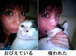 Meme Eat - image 637 cat eat korea meme