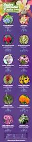 native plant finder best 20 native plants ideas on pinterest california native