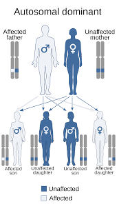 Pedigree Chart For Color Blindness Human Genetics Wikipedia