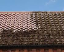 Moss Cleaner For Patios Best Moss And Mould Remover For Patios And Roofs Roof Cleaning