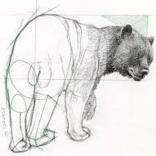 classical drawing series black bear programs and events calendar