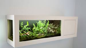 favorite terrarium plants sunset