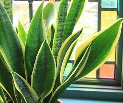 low light indoor plants easiest indoor plants the greenhouse