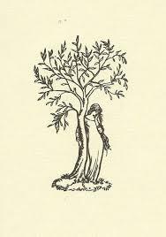 best 25 juniper tree ideas on twisted tree fir tree