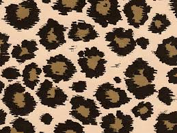 cheetah print wrapping paper leopard print wrapping paper safari 24 x85