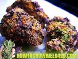 ryanriley how to grow weed fast indoor marijuana growing blog