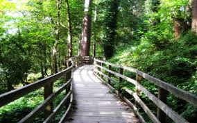 nature bridge forest green beautiful forests hd wallpaper free