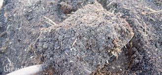 the problem with manure
