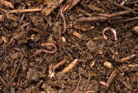 Composting Pictures by Worm Composting Metro