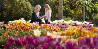 technicolor tulips spring into bloom in eden u0027s med garden